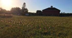 Field of flags for cardholders